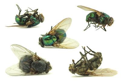 Gegen Fliegen in der Wohnung helfen bereits einfache Hausmittel.