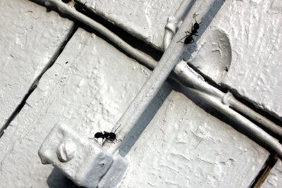 Auch wenn die Ameisen in der Wohnung sind, kann man etwas gegen sie tun.