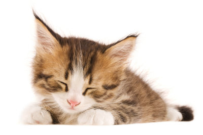 Wenn die Katze schläft und schnurrt, dann fühlt sie sich wohl.