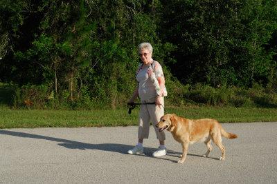 Lange Spaziergänge sind bei Hunden mit Arthrose zu vermeiden.