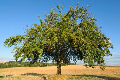 Da steht der Apfelbaum. Und was schreiben Sie heute in Ihr Baumtagebuch?