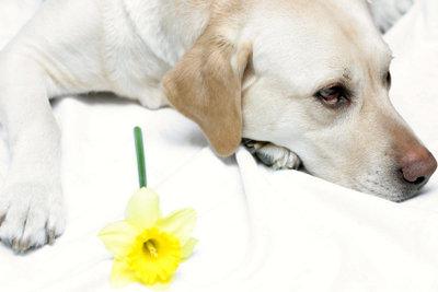 Gräser und Bumen können den Hund zum Niesen bringen.