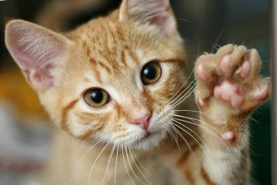 Katzenallergie kann behandelt werden!