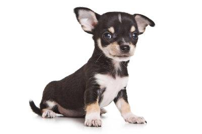 Welchen weiblichen Hundenamen könnte sie tragen? Wie wär's mit Aiko, Nanouk oder Zoe?