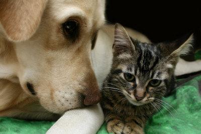 Scheinschwangere Hunde suchen sich einen Welpenersatz zum Pflegen.