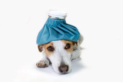 Erbricht sich ein Hund, können die Ursachen sehr unterschiedlich sein.