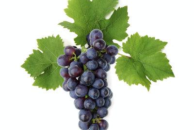 Selbst gemachter Weintraubensaft ist lecker und gesund.