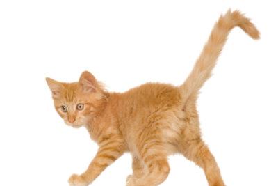 Das Katzengeschlecht lässt sich meist sehr deutlich ertasten.