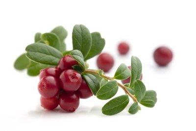 Cranberries sind lecker und helfen bei Blasenentzündung.