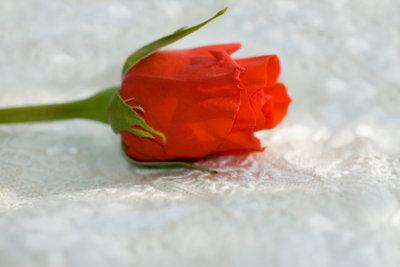 Rosen gehören einfach zum Valentinstag!