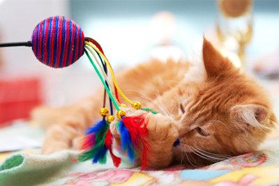 Katzen mögen nicht nur Spiele, sondern auch viele Streicheleinheiten.