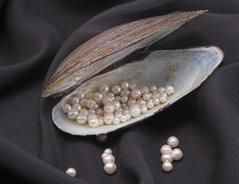 Erkenne perlen echte wie ich erkennt man