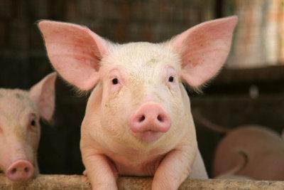 Schweinemedaillons eignen sich für deftige Gerichte ebenso wie für Schonkost.