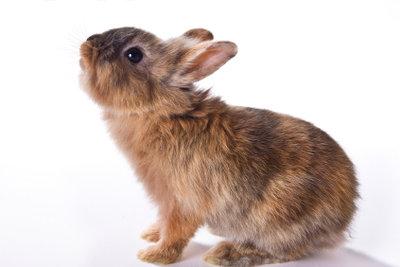Oft beißt das Kaninchen aus Angst.