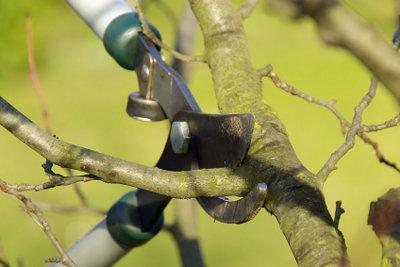 Der richtige Obstbaumschnitt - für eine ertragreiche Ernte.
