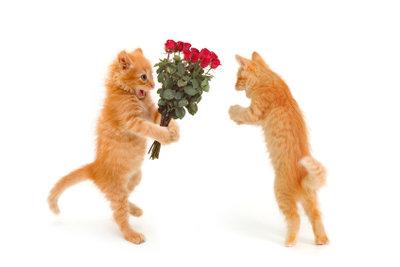 Zum Valentinstag können Sie geliebten Menschen auf verschiedene Arten Ihre Zuneigung zeigen.
