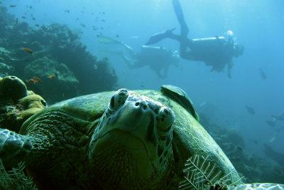 Füttern Sie Ihre Schildkröten artgerecht.