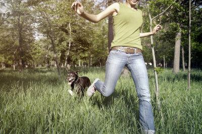 Schützen Sie Ihren Hund mit geeigneten Zeckenmitteln, dann ist das Toben im hohen Gras kein Problem.