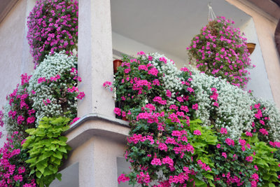 Mit dem richtigen Frostschutz für Ihre Balkonpflanzen blühen sie auch im nächsten Sommer üppig.