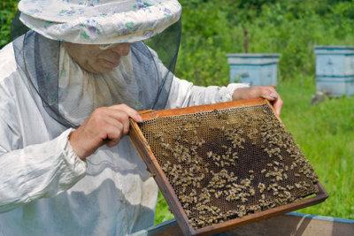 Ein Imker kann beim Entfernen von Bienennestern helfen.