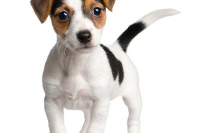 Der Hundename sollte zur Persönlichkeit des Hundes passen.