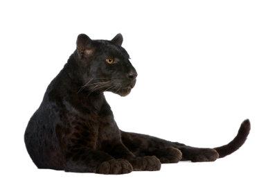 Schön und geheimnisvoll: Im Panther-Kostüm machen Sie immer eine gute Figur.