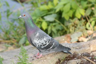Der Vogel ist hungrig? Dann bringen Sie ihm etwas Taubenfutter mit.