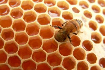 Eine chronische Erkältung ist lästig, stärken Sie dauerhaft und natürlich Ihr Immunsystem mit Honig.