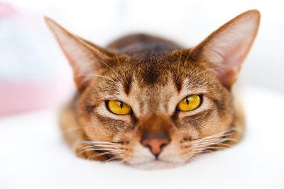 Katzenohren zu Fasching können Sie mit wenigen Materialien selbst basteln.