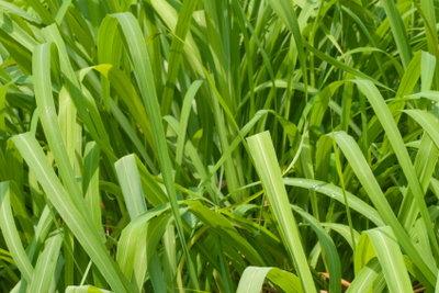 Grasgrün ist die Farbe der Wahl für Ihr Märchenkostüm.