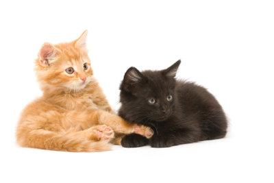 Babykatzen müssen lernen, stubenrein zu werden.