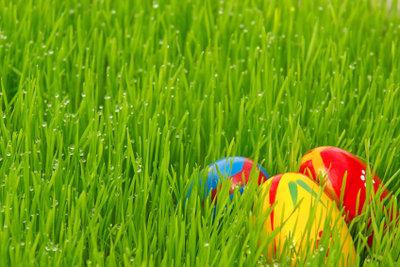 Ostergras lässt sich mit Weizen leicht selbst säen.