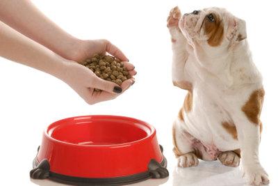 Vermeiden Sie bei Giardienbefall Futter und Leckerli aus Getreide.