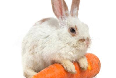 Wenn ein Kaninchen grunzt, dann möchte es Ihnen etwas ganz Besonderes mitteilen.