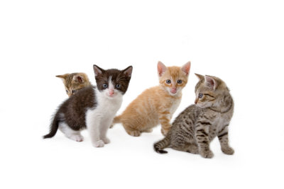 Bei Ohrmilben müssen alle im Haushalt lebenden Katzen behandelt werden.