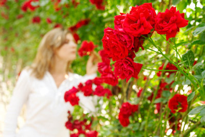 Gesunde Rosen ohne Rosenrost