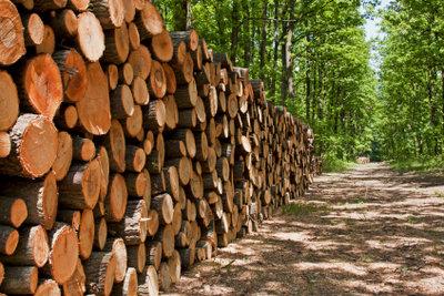 Verstecke für die Schatzsuche im Wald zum Kindergeburtstag gibt es viele.
