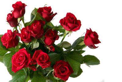 Wenn Sie Rosen richtig anschneiden, haben Sie länger Freude an Ihrem Strauß.