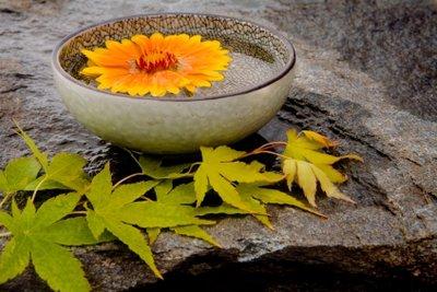Meditation fördert die Beruhigung des menschlichen Organismus.