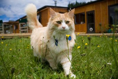 In einem Katzengeschirr ist das Tier gut gesichert und kann nicht weglaufen.