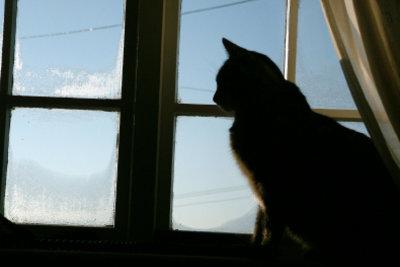 Nächtliches Geschrei einer Katze kann viele Ursachen haben.