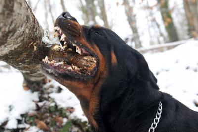 Für eine gute Hundeerziehung ist es nie zu spät!