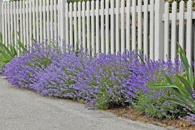 Eine Aromatherapie mit Lavendelöl vertreibt schlechte Gedanken.