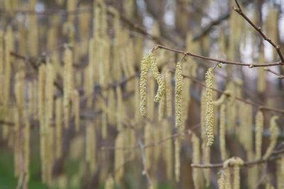 Vorsicht beim Trocknen von Milbenbezügen, denn auch Pollen lösen Allergien aus.
