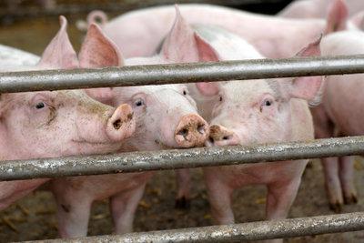 Massentierhaltung bedeutet für Tiere lebenslange Qual - gehen Sie aktiv dagegen vor
