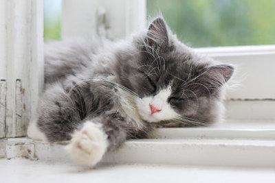 Eine Katzenklappe in Ihrer Insektenschutztür ist die ideale Lösung für Freigänger.