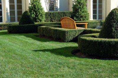 Büsche im Garten brauchen einen regelmäßigen Schnitt, um sich ganz zu entfalten.