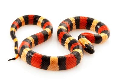 Accessoires aus Schlangenleder sind immer in Mode.
