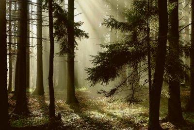 Einen Wald zu kaufen hat nicht nur Vorteile, Sie sollten sich auch mit der Schattenseite befassen.