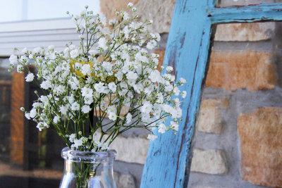 Schleierkraut passt hervorragend in Blumensträuße und sieht auch im Garten gut aus.